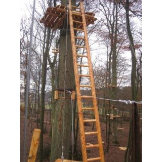 ladder in larch